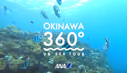360度動画は地上だけじゃない!マンタやウミガメが見れます!